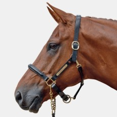 Albion Leather Head Collar