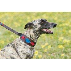 Weatherbeeta Lurcher Polo Leather Dog Collar  (Beaufort Brown/Pink/Blue)