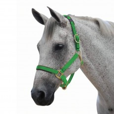 Roma Brights Headcollar (Lime)