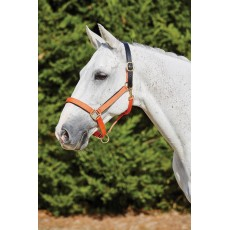 Kincade Deluxe Webbed Headcollar With Leather Crown (Orange)