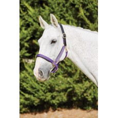 Kincade Deluxe Webbed Headcollar With Leather Crown (Purple)