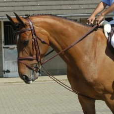 Whitaker Training Reins (Brown)