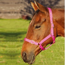 JHL Orion Headcollar  (Brown)