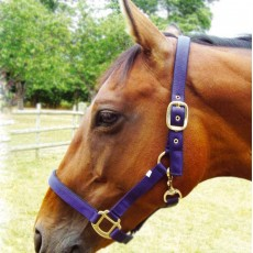 JHL Standard Headcollar (Navy/Light Blue)