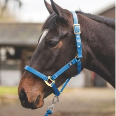 Mark Todd Turnout Safety Headcollar (Royal)