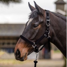 Mark Todd Deluxe Padded Headcollar With Leadrope (Black)