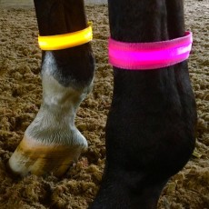Equisafety Adults LED Flashing Leg/Armband (Pink)