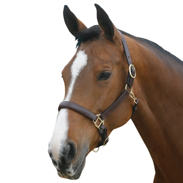 Mark Todd Leather Headcollar (Havana)