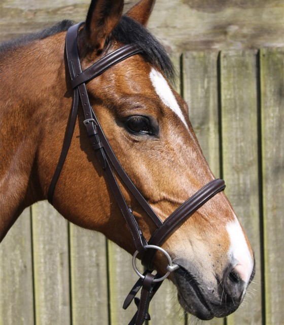 JHL Raised Cavesson Bridle (Brown)