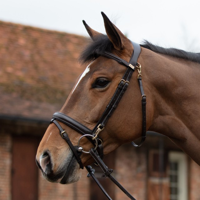 Mark Todd Bridle With Clips