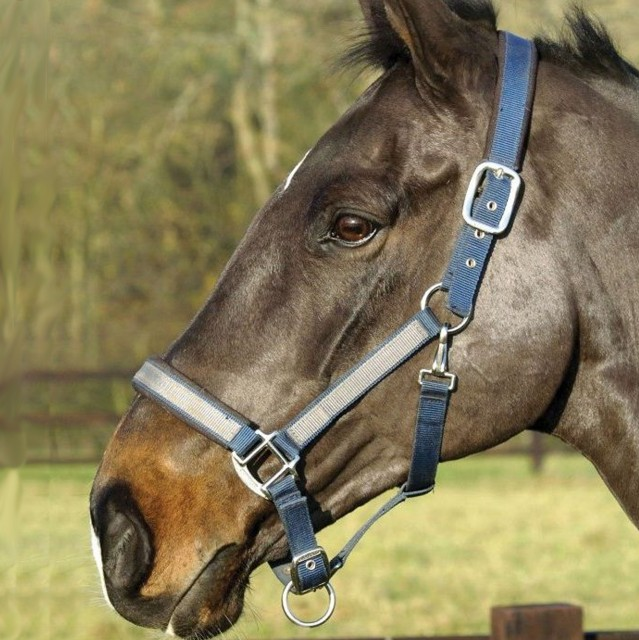 Mark Todd Padded Headcollar (Navy/Grey)