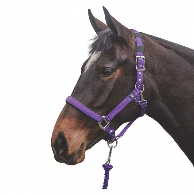 Mark Todd Deluxe Padded Headcollar With Leadrope (Purple)